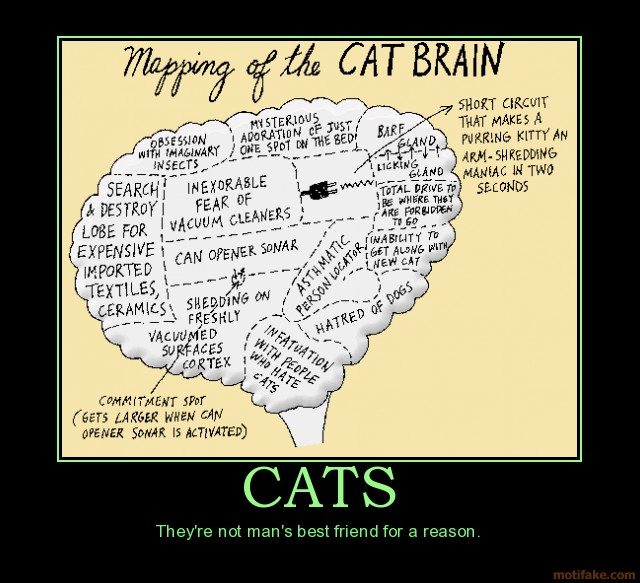 cats-cats-brains-demotivational-poster-1271930990