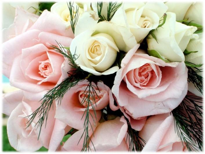 Roses_se_rs