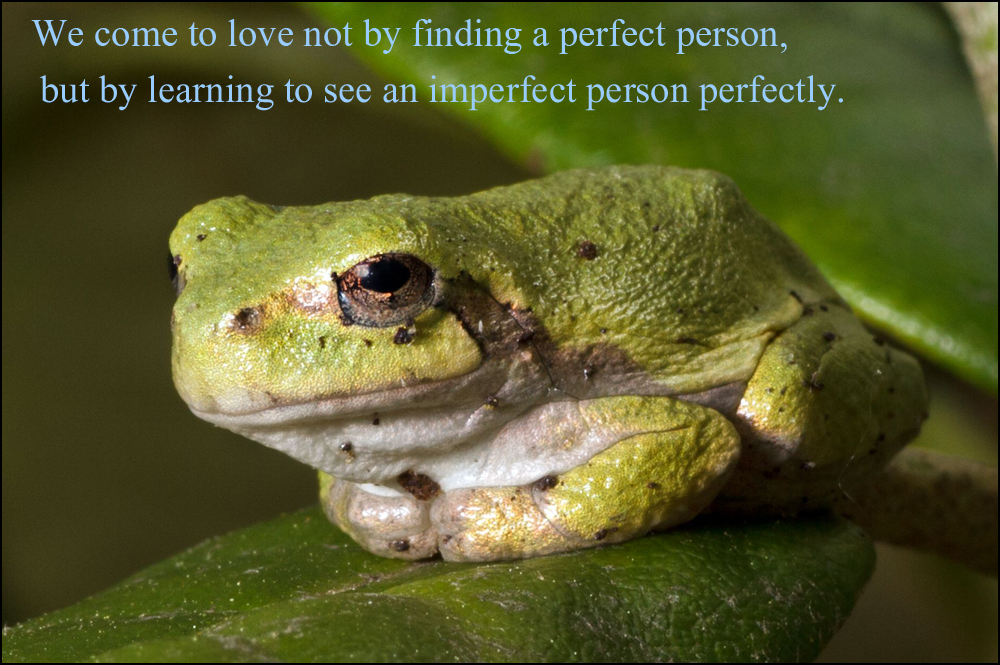 frog_P