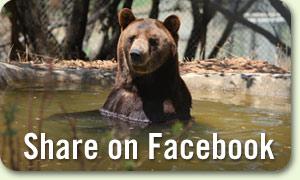 300-benthebear-share-facebook