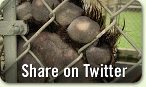 300-benthebear-share-twitter