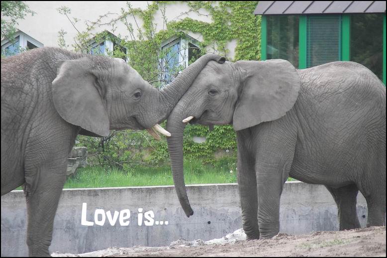 Love is E1