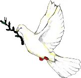 Peace_dove2