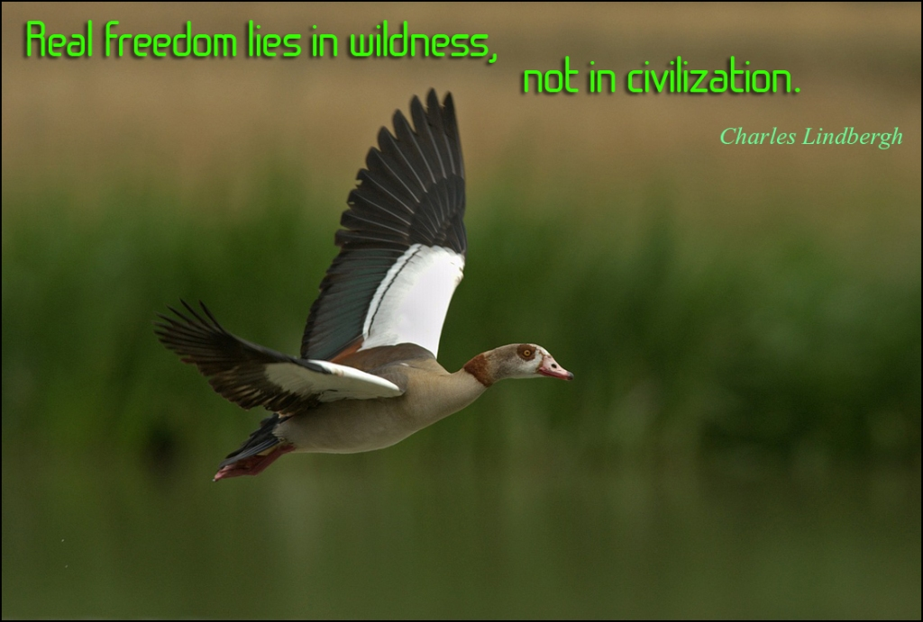 Real freedom