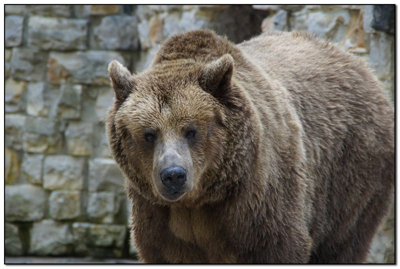 bear-800