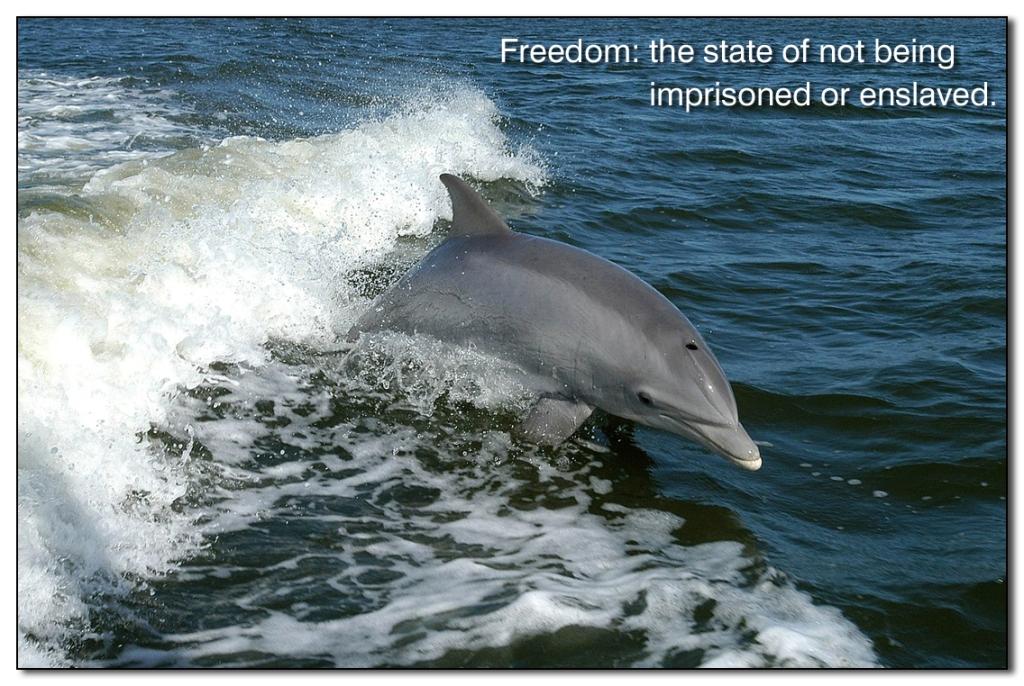 Freedom___
