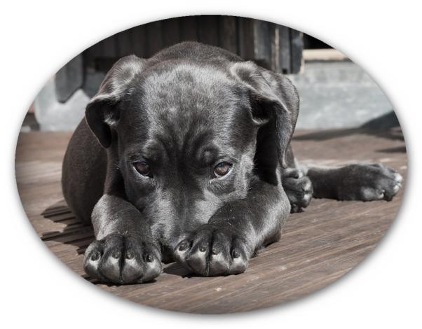 Puppy_
