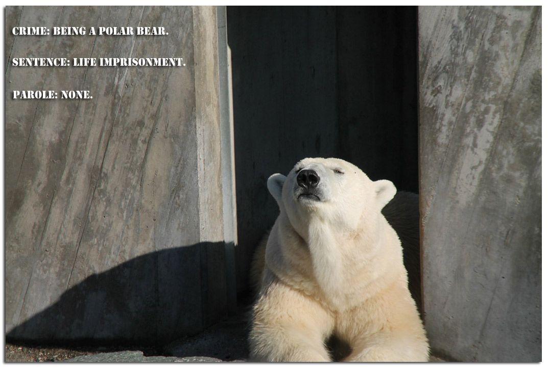 Polar-Bear.__jpg