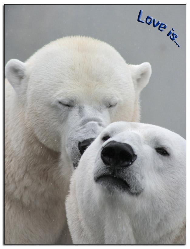 Polar-Bears__