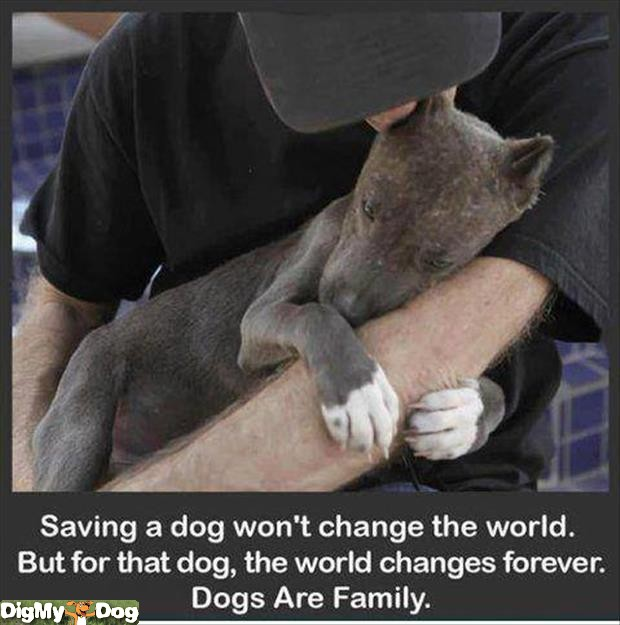 save-dog-dogs-1378253105
