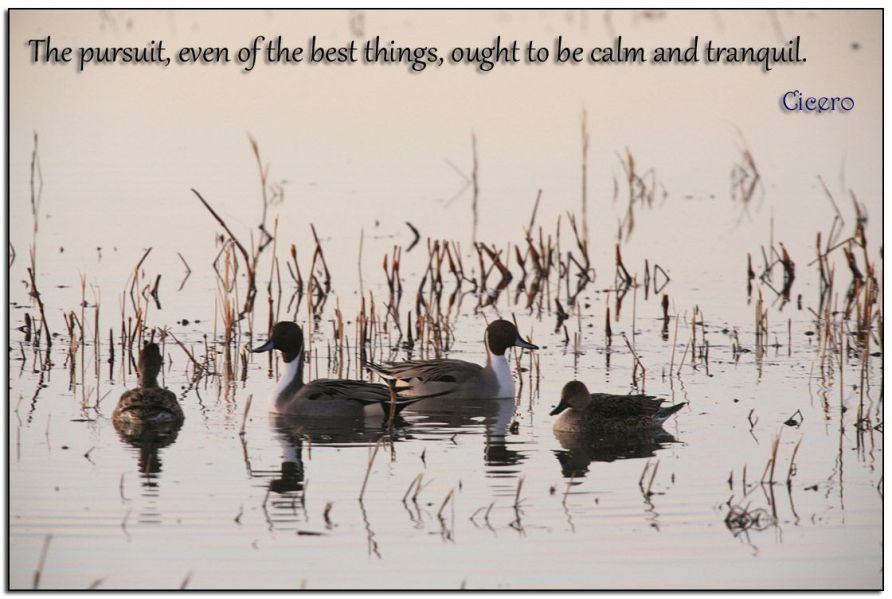 Calm-&-Tranquil