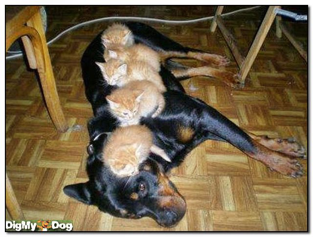 Dog-and-kittens