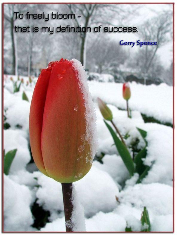 freely-bloom-