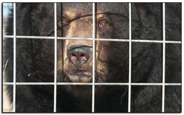 Ricky-the-Bear