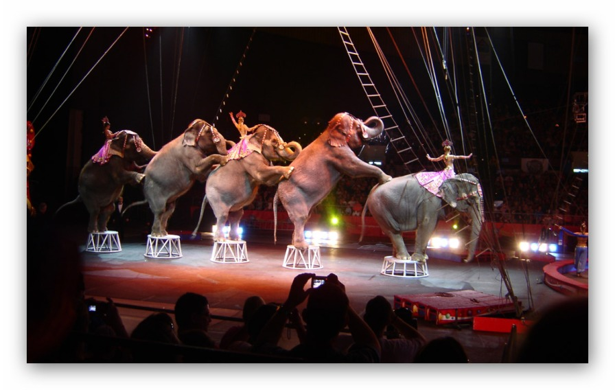 Elephants-circus