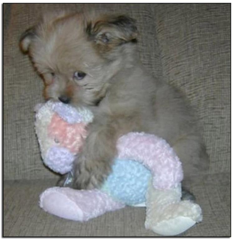 Dog-cuddle-3