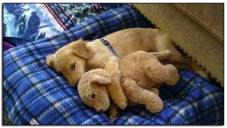 Dog-cuddle-4