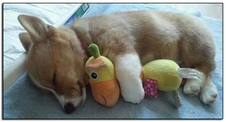 Dog-cuddle