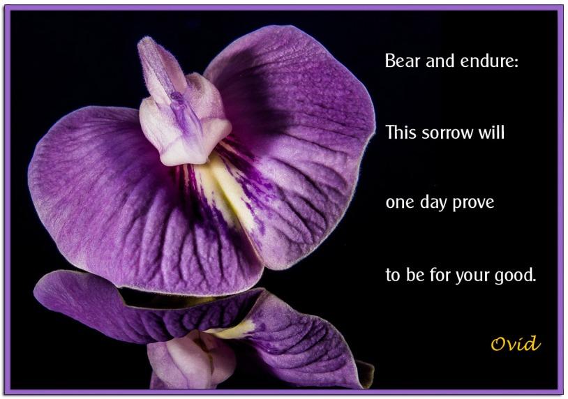 Bear-and-Endure