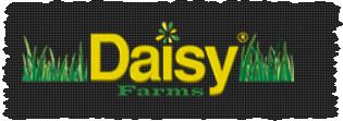 Daisy-Farms