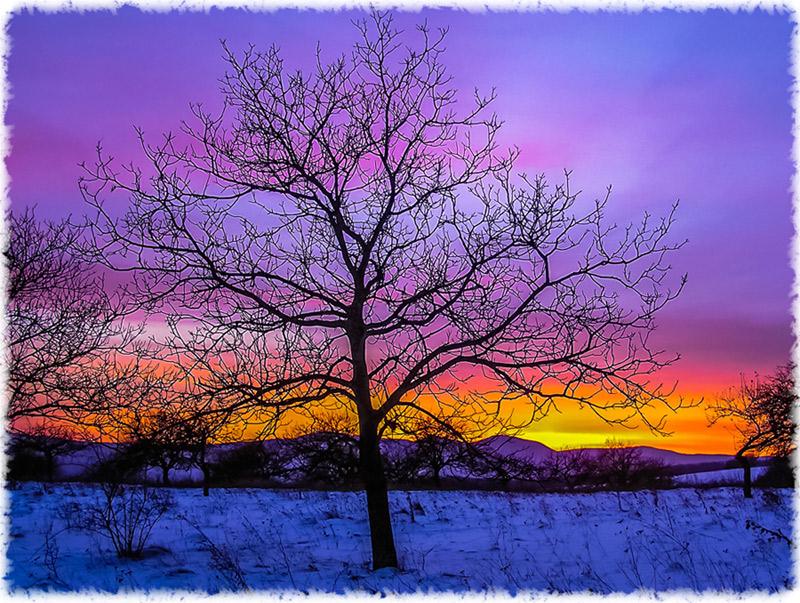 Tree_snow
