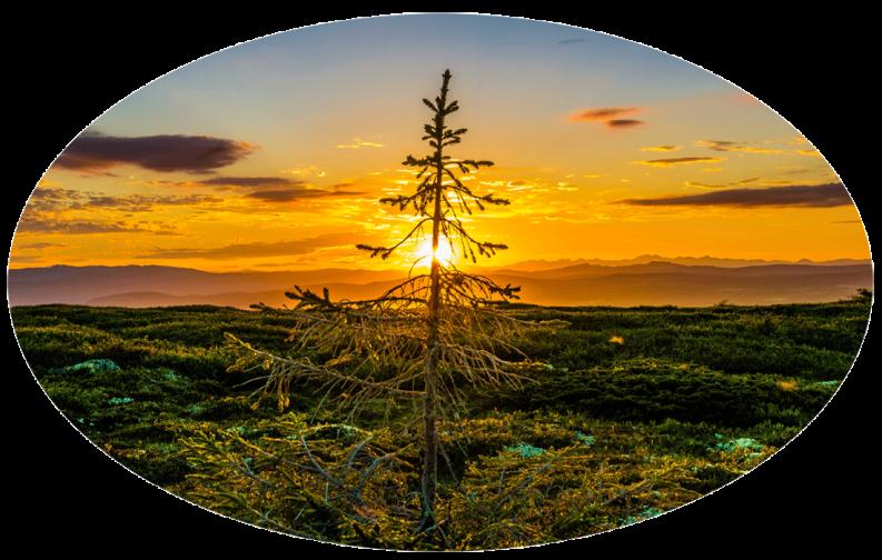 Tree-and-Sunset