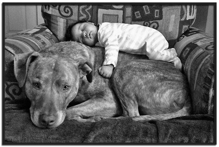 dog-napping_